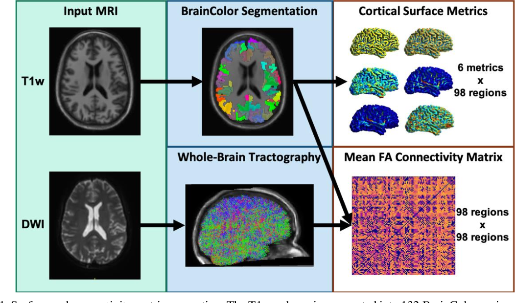 Figure 1 for Joint analysis of structural connectivity and cortical surface features: correlates with mild traumatic brain injury