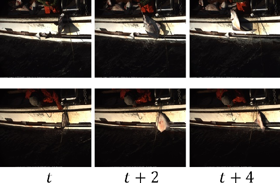 Figure 1 for Video-based Hierarchical Species Classification for Longline Fishing Monitoring