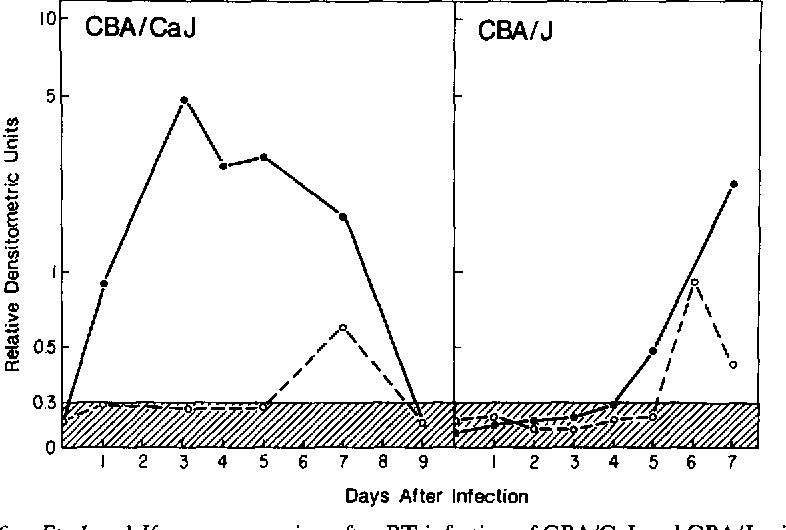 FIGURE 6 . Eta-1 and Ifg gene expression after RT infection of CBA/CaJ and CBA/J mice. 10 3 PFU ofRT were inoculated intraperitoneally into CBA/CaJ (left panel) or CBA/J mice (right panel ) . The levels of steady state Eta-1(0) or Ifg (O) RNAs expressed in peritoneal cells at the indicated days after RT infection are shown . The hatched area indicates the mean +/- 2 SE of Eta-1 and Ifg RDU of RNA in peritoneal cells from mice injected with saline . Eta-1 was also elevated 3 d after RT infection of CBA/CaHT6J mice (RiCR/Eta-la), at levels similar to that of CBA/CaJ (RDU = 3.80) .