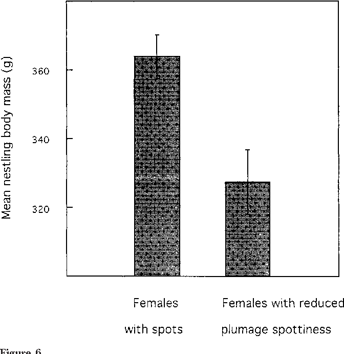 Figure 6 Mean nestling body mass (grams) in relation to the manipulation of the mothers' plumage spottiness. Nestlings were on average 34 days of age. Bars represent means 61 SE.