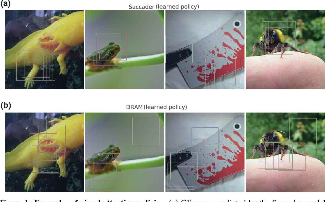 Figure 1 for Saccader: Improving Accuracy of Hard Attention Models for Vision