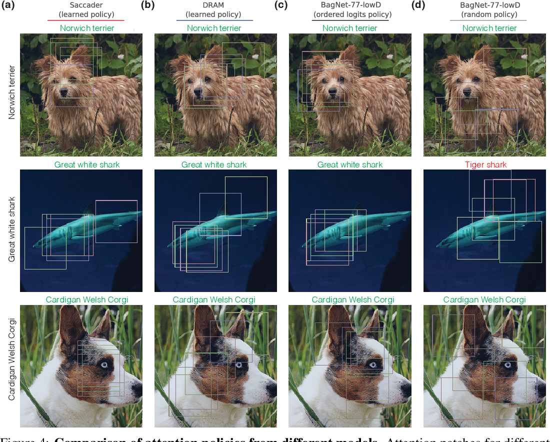 Figure 4 for Saccader: Improving Accuracy of Hard Attention Models for Vision