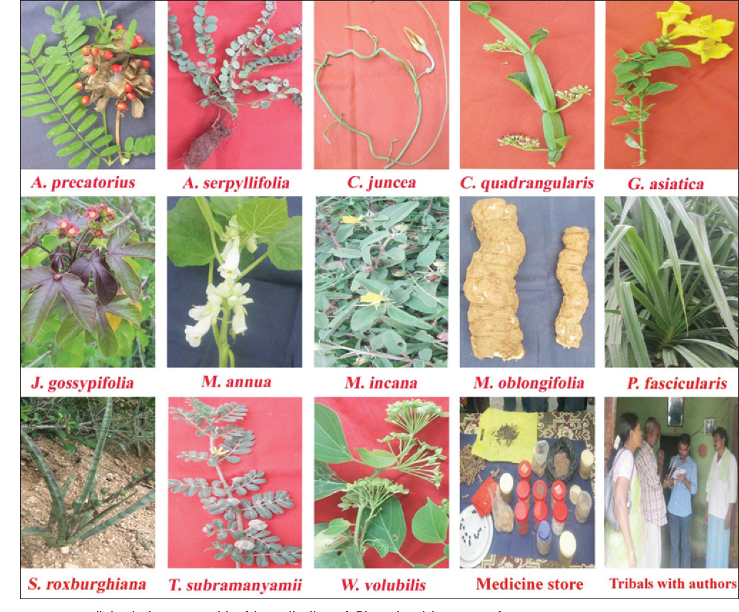 Figure 3 from Ethnomedicinal studies on plants used by Yanadi tribe