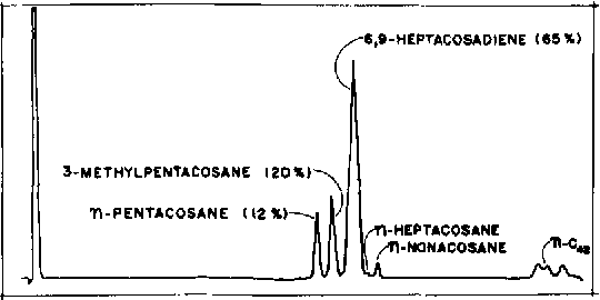 FIG. 4. GLC of P. americana hydrocarbons. 6 X 1/4 in. OD, 1% SE-30 on Diatoport W (60-80 mesh). Programmed-120-350 C at 5 C/min. Baker, G. L, et al. (41), reproduced with permission.