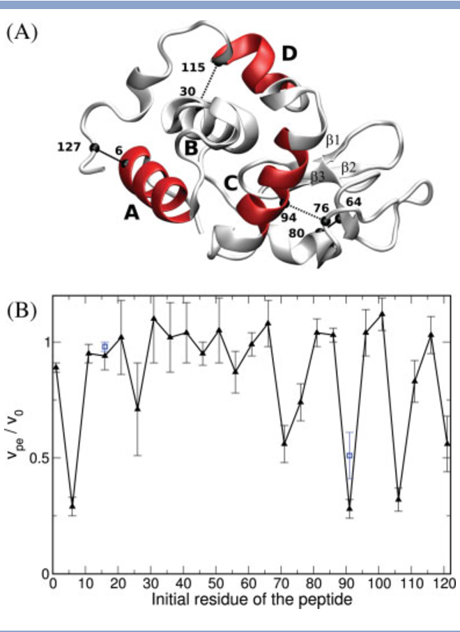 Identification And Characterization Of Folding Inhibitors Of Hen Egg