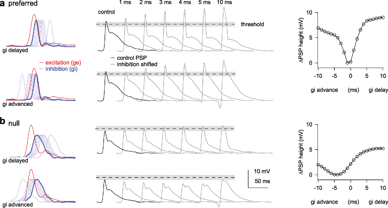 Figure 3 From Its About Time How Input Timing Is Used And Not Create Diagram Cell 2 Temporal Shifts Of Inhibition Affect Psp Height Same Format