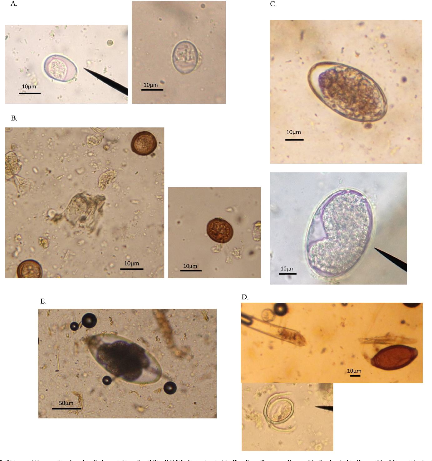 Figure 1 from Fecal parasite identification by microscopy and PCR in