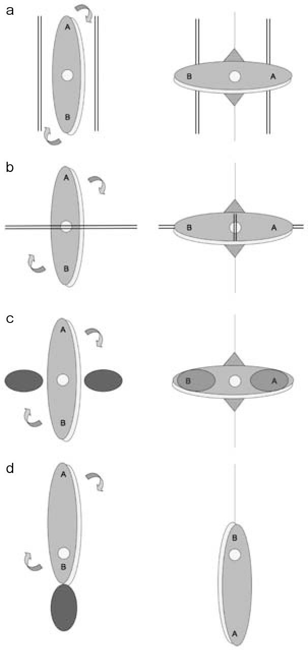 Structure Of Deep Brachial Artery Semantic Scholar