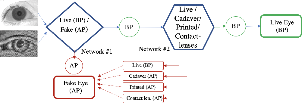 Figure 1 for Iris Liveness Detection using a Cascade of Dedicated Deep Learning Networks