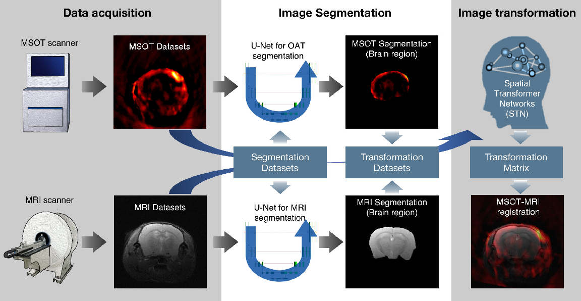 Figure 1 for Deep learning facilitates fully automated brain image registration of optoacoustic tomography and magnetic resonance imaging