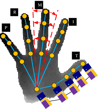 Figure 3 for HMTNet:3D Hand Pose Estimation from Single Depth Image Based on Hand Morphological Topology