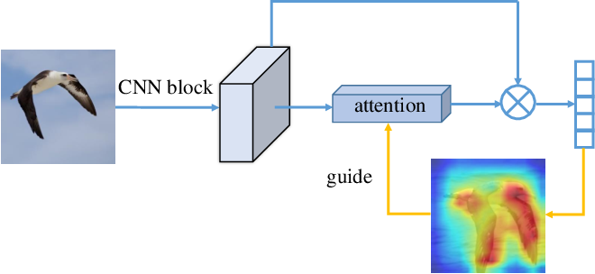 Figure 1 for Grad-CAM guided channel-spatial attention module for fine-grained visual classification