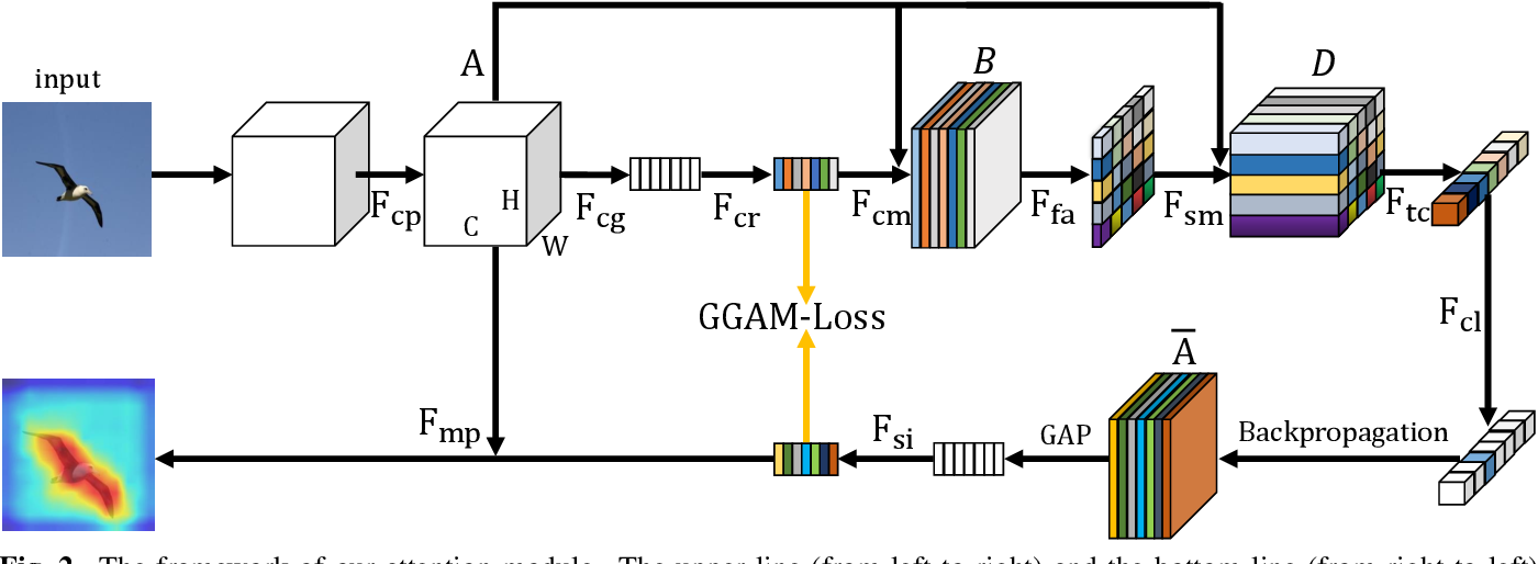 Figure 2 for Grad-CAM guided channel-spatial attention module for fine-grained visual classification