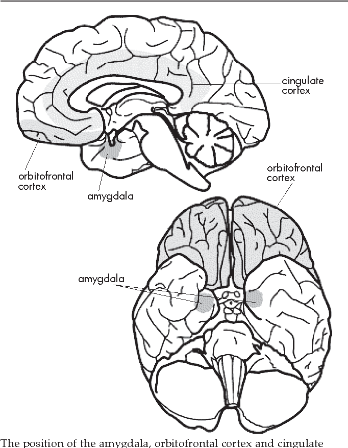 A Psychological And Neuroanatomical Model Of Obsessive Compulsive
