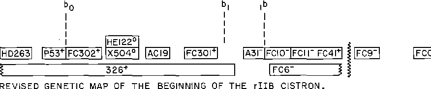 Fig. 1. The genetic map of the beginning of the rIIB Ciston as presented by Barnett et al. [1] and as revised, based on evidence presented here