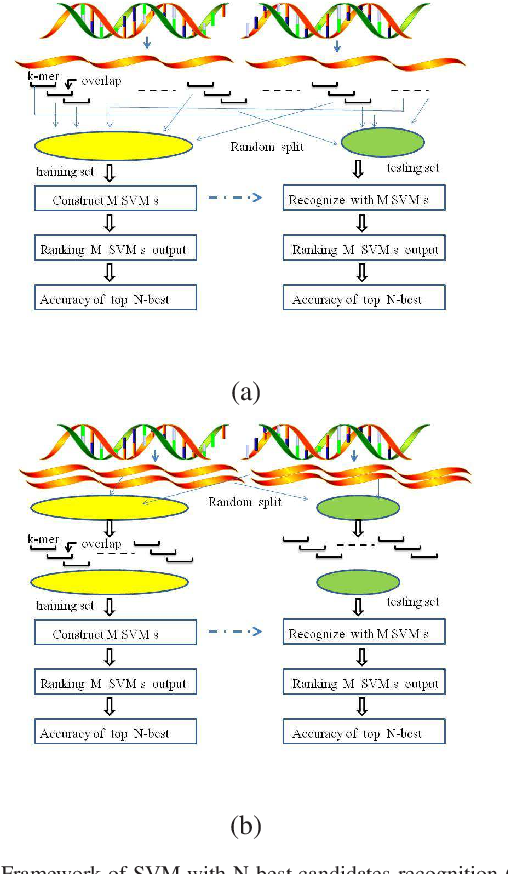 Figure 4 for Random Fragments Classification of Microbial Marker Clades with Multi-class SVM and N-Best Algorithm