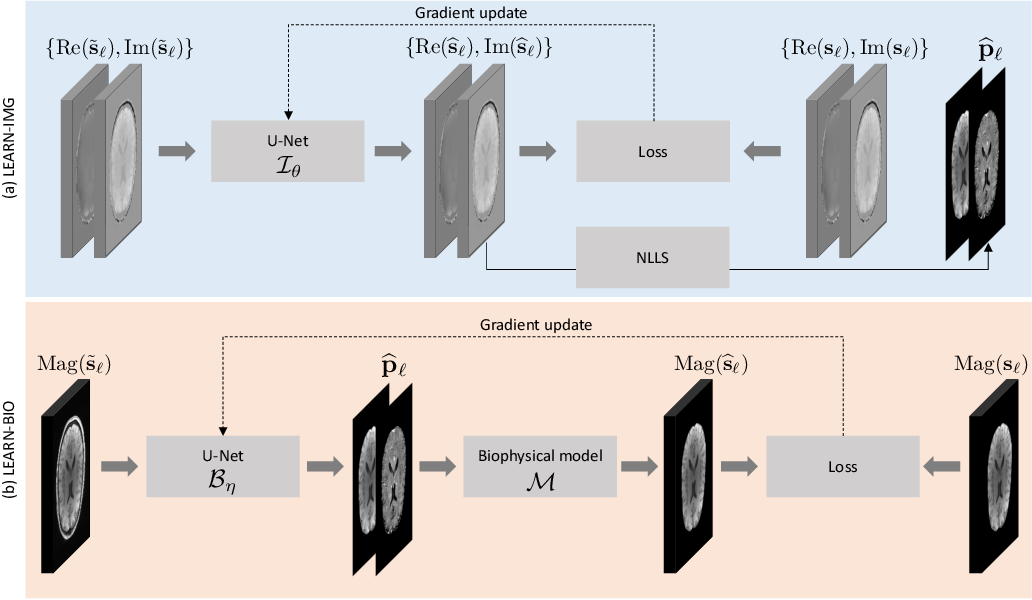 Figure 4 for Learning-based Motion Artifact Removal Networks (LEARN) for Quantitative $R_2^\ast$ Mapping
