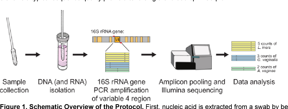 5 Figure1 1 efficient nucleic acid extraction and 16s rrna gene sequencing for