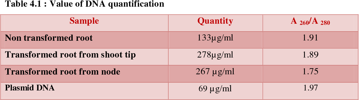 Table 4.1 : Value of DNA quantification