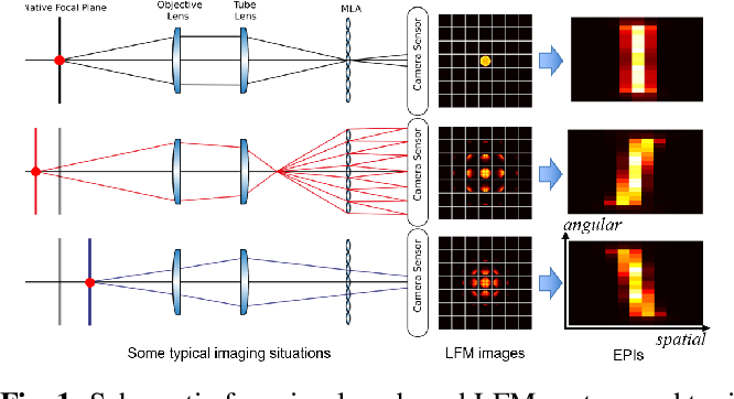 Figure 1 for Model-inspired Deep Learning for Light-Field Microscopy with Application to Neuron Localization