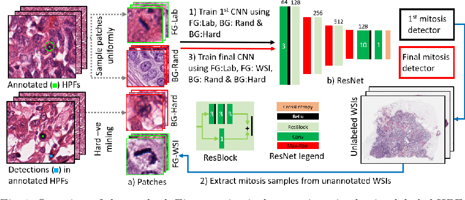 Figure 1 for Leveraging Unlabeled Whole-Slide-Images for Mitosis Detection