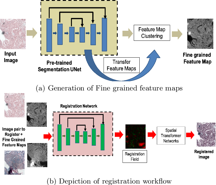 Figure 1 for Registration of Histopathogy Images Using Structural Information From Fine Grained Feature Maps