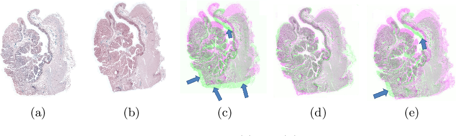 Figure 3 for Registration of Histopathogy Images Using Structural Information From Fine Grained Feature Maps