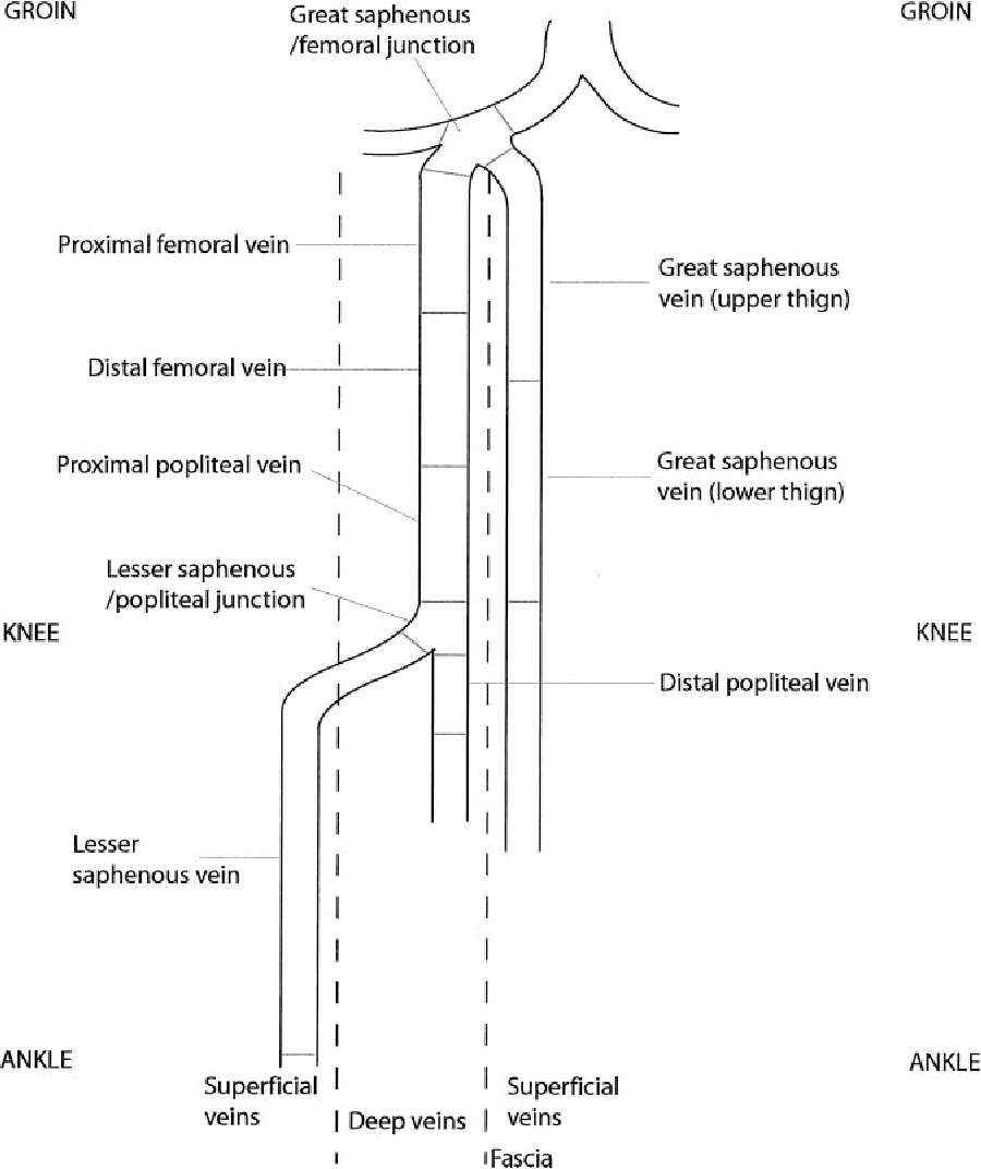 Diagram Of Veins Lower Extremities - Information Of Wiring Diagram •