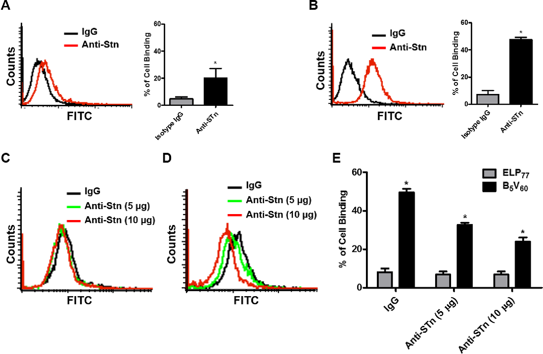 Figure 4. Estimation of STn expression and competition assay. STn expression levels of HT-29 cells (A) and 5637 cells (B) were measured using flow cytometry after incubation with anti-STn –Alexa 488 antibody for 1 h at room temperature. 5637 cells (1 × 106) were pre-incubated with different concentrations of anti-STn antibody (5 and 10 µg/ml) for 1 h at room temperature. The cells were further incubated with 10 µM ELP77 (C) and B5V60 (D) at 4 °C. Histograms are representative of five independent experiments (n = 5). Inhibition of binding activity were analyzed through flow cytometry. (E) Percentage of cell binding by ELP77 and B5V60 after pre-incubation with anti-STn antibody. *P < 0.05 (Student's t-test) for ELP77 versus B5V60.