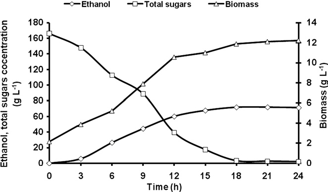 Fig. 4. Effect of fermentation time on cell biomass, ethanol production and sugar consumption in a laboratory fermenter.