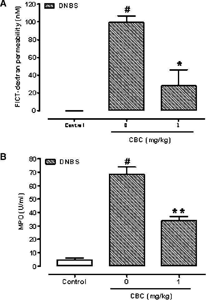 Figure 9 Inhibitory effect cannabichromene (CBC) on serum FICT-dextran concentration (a measure of intestinal barrier function) (A) and myeloperoxidase (MPO, a marker of intestinal inflammation) activity (B) in dinitrobenzene (DNBS)-induced colitis in mice. Permeability and MPO activity were measured on colonic tissues 3 days after vehicle or DNBS (150 mg·kg-1, intracolonically). CBC (1 mg·kg-1) was administered (i.p.) for 2 consecutive days starting 24 h after the inflammatory insult. Bars are mean SEM of five mice for each experimental group. #P < 0.001 versus control; *P < 0.05 and **P < 0.01 versus DNBS alone.
