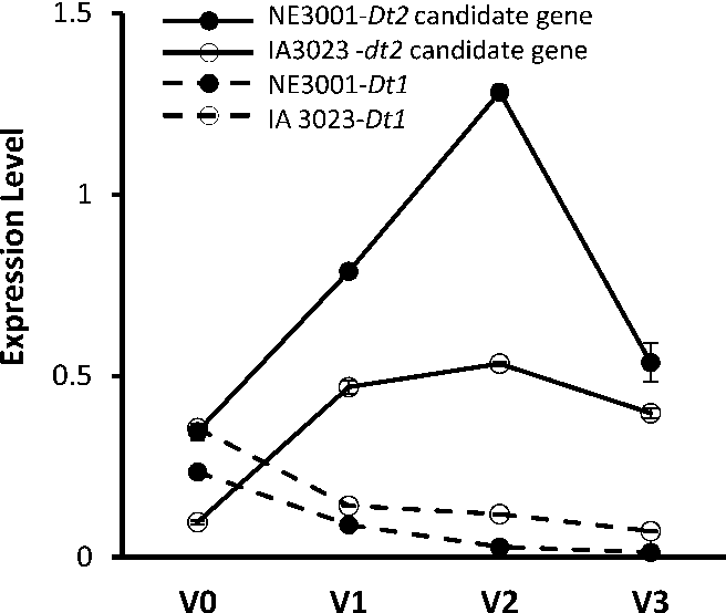 Figure 4. Expression of Dt1 or dt1 and the Dt2/dt2 Candidate Gene Glyma18g50910 in NE3001 and/or IA3023 Detected by qRT-PCR.