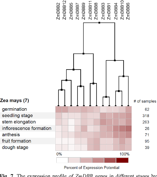 Fig. 7 The expression profile of ZmDBB genes in different stages by Genevestigator analysis. The deep and light red shades represent the relative high or low expression levels, respectively
