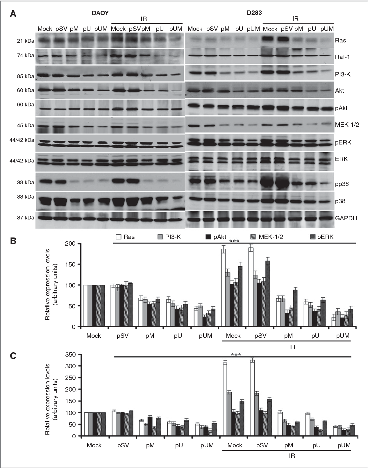 Figure 3 from siRNA-mediated downregulation of MMP-9 and