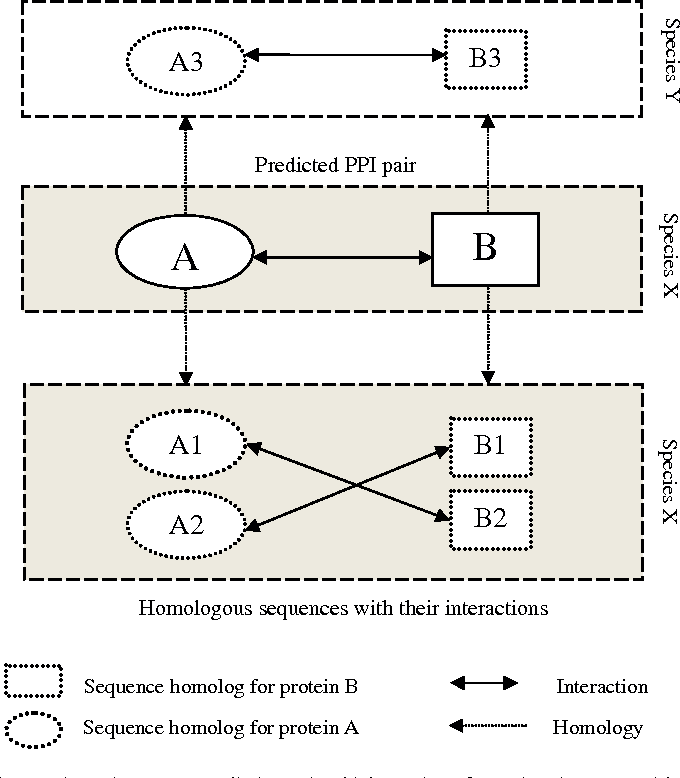 Fig. 4. Concept for the homologous interaction. Given a PPI prediction pair which consists of protein A interacts with protein B (A–B). '–' denotes interacts. Homologous sequences for A are A1, A2 and A3 and homologous sequences for B are B1, B2 and B3. As the predicted PPI pair was from species X, the homologous sequences (A1, A2, B1 and B2) identified in species X are considered as paralogs. Meanwhile, the homologous sequences (A3 and B3) identified in species Y are considered as orthologs. Protein pair A–B is considered as a homologous interaction on the basis that there exists an interaction between the homologs from each of the predicted interacting protein.