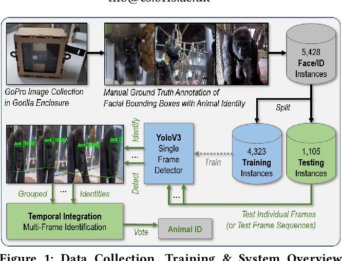Figure 1 for A Dataset and Application for Facial Recognition of Individual Gorillas in Zoo Environments