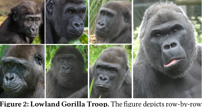 Figure 3 for A Dataset and Application for Facial Recognition of Individual Gorillas in Zoo Environments