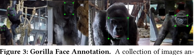 Figure 4 for A Dataset and Application for Facial Recognition of Individual Gorillas in Zoo Environments