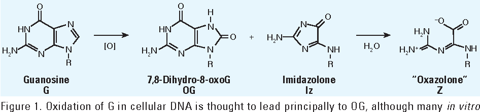 Structure And Potential Mutagenicity Of New Hydantoin Products From