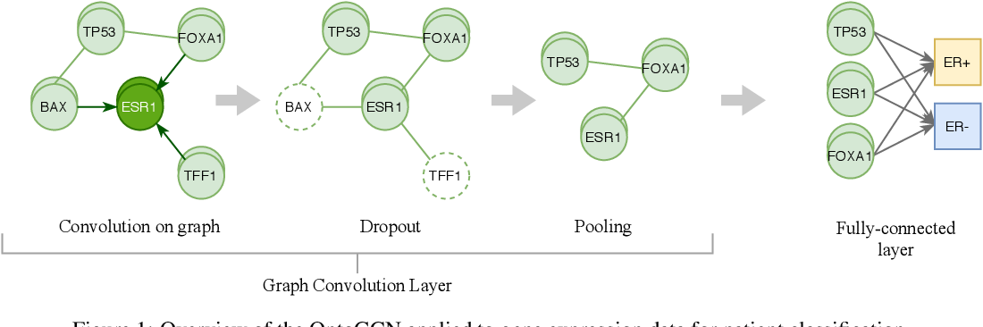 Figure 1 for Using ontology embeddings for structural inductive bias in gene expression data analysis
