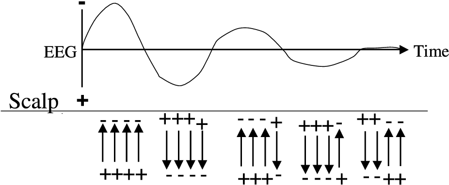 Figure 2.8: Volume conduction in the brain. Bold lines indicate a stronger impact on the measured signal, since the distance from the corresponding potential generator to the scalp electrode and thus the total resistance is smaller.
