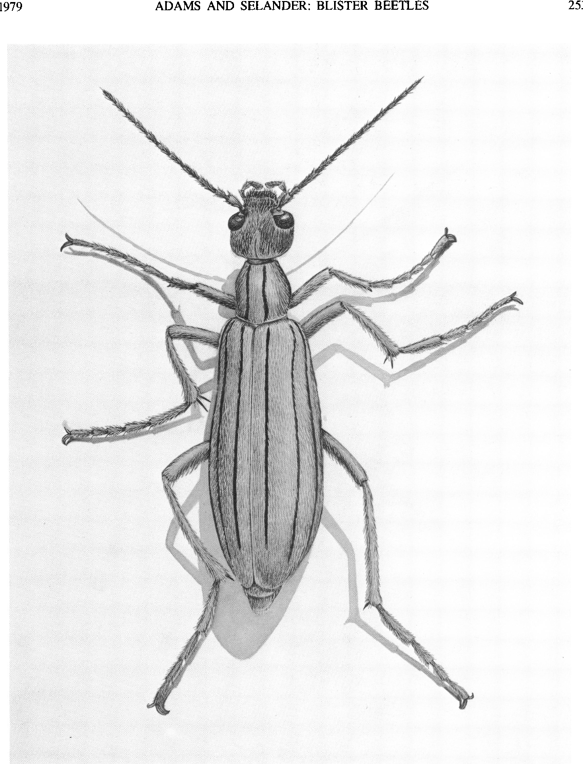 PDF] The Biology of Blister Beetles of The Vittata Group of