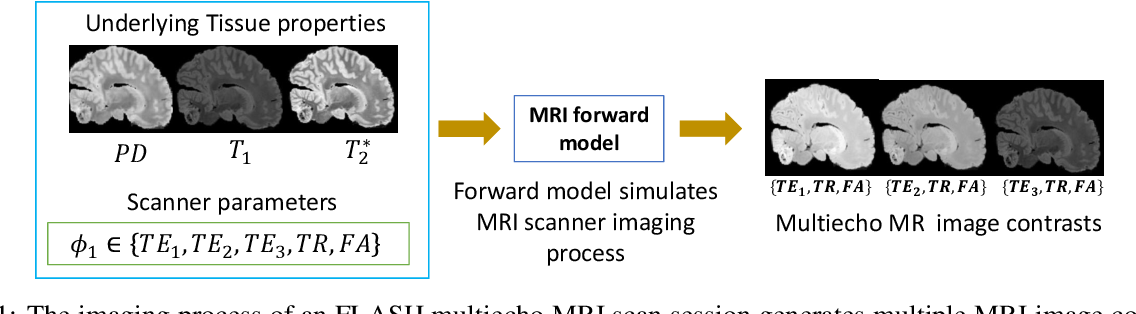 Figure 1 for Unsupervised learning of MRI tissue properties using MRI physics models