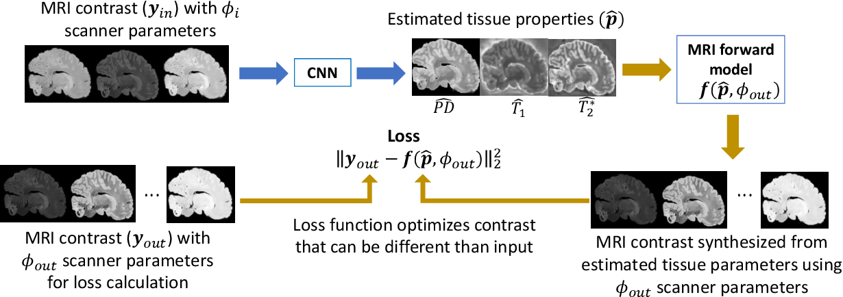 Figure 3 for Unsupervised learning of MRI tissue properties using MRI physics models