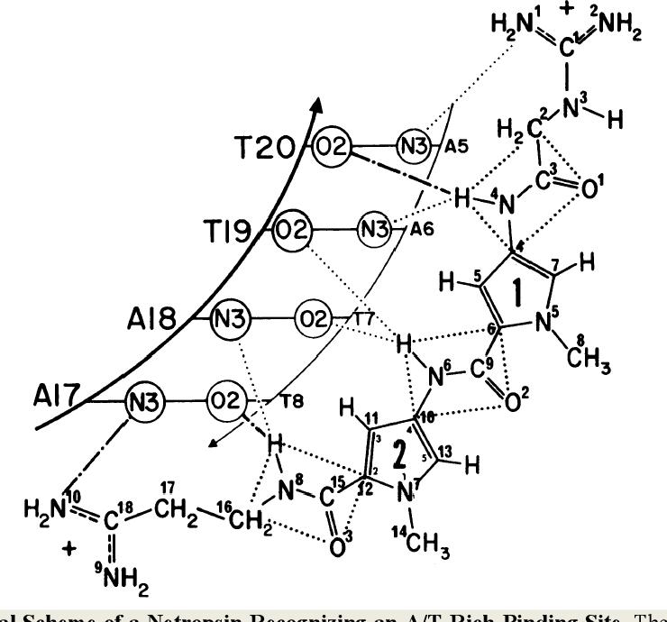 Biophysical Studies Of Hairpin Polyamides With Broad Spectrum