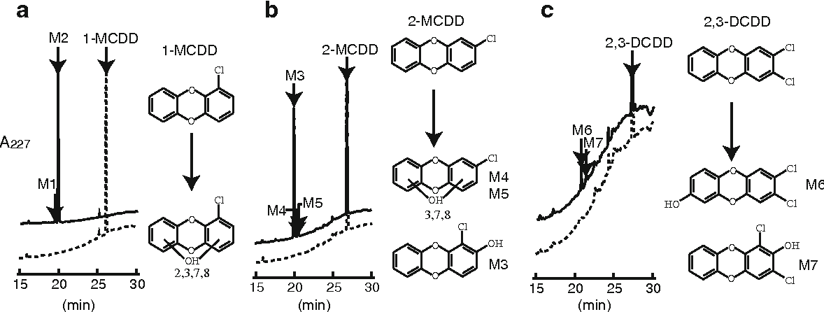 """Fig. 1 HPLC profiles of 1-MCDD (a), 2-MCDD (b), and 2,3-DCDD (c) and their metabolites by the recombinant S. cerevisiae cells expressing PcCYP11a3 (solid line) and the control S. cerevisiae cells (dotted line). After reaction, the reaction mixture was extracted and analyzed by HPLC as described in """"Materials and methods"""". a M1 and M2 appear to have a hydroxyl group at a distinct site in a lateral"""