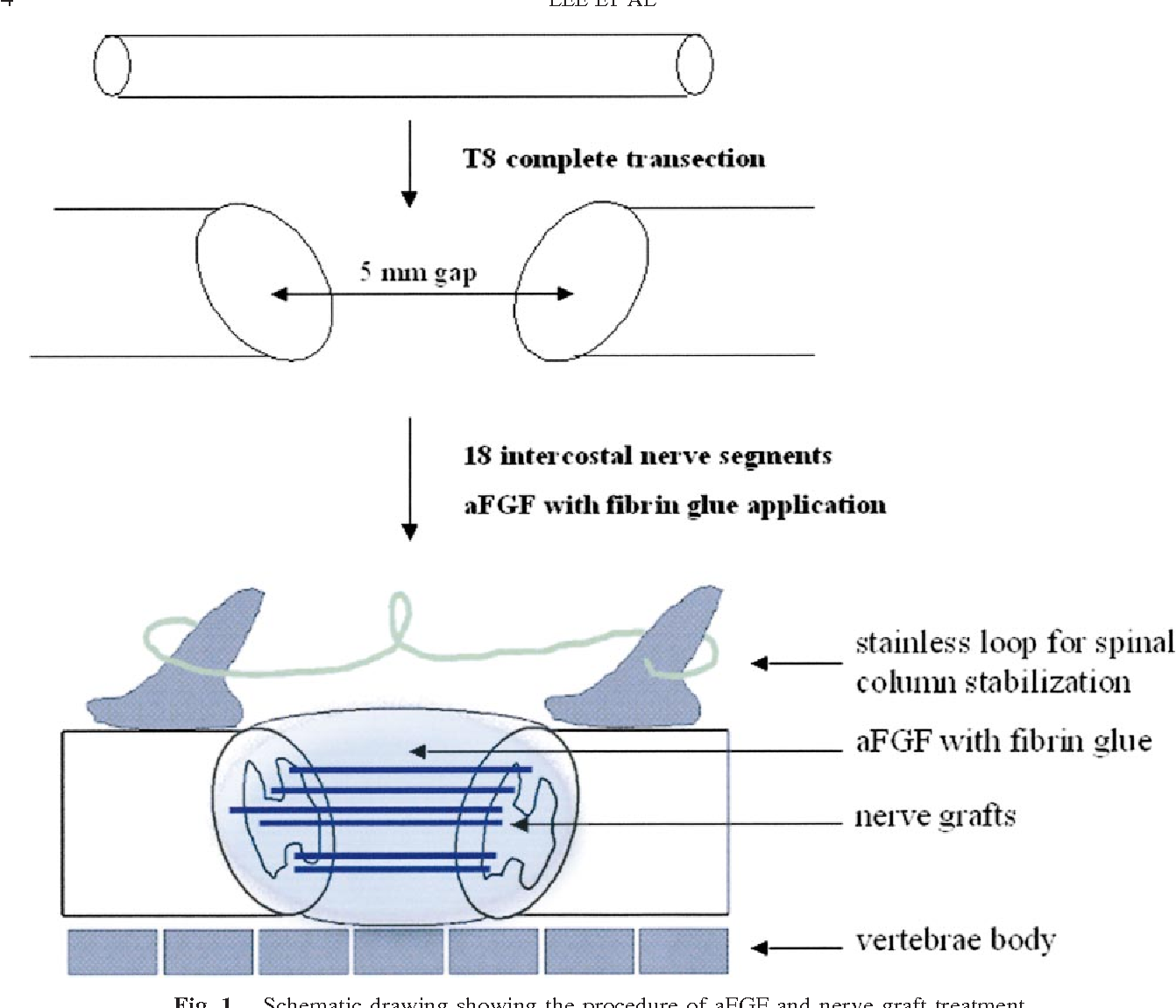 Motor recovery and anatomical evidence of axonal regrowth in spinal ...