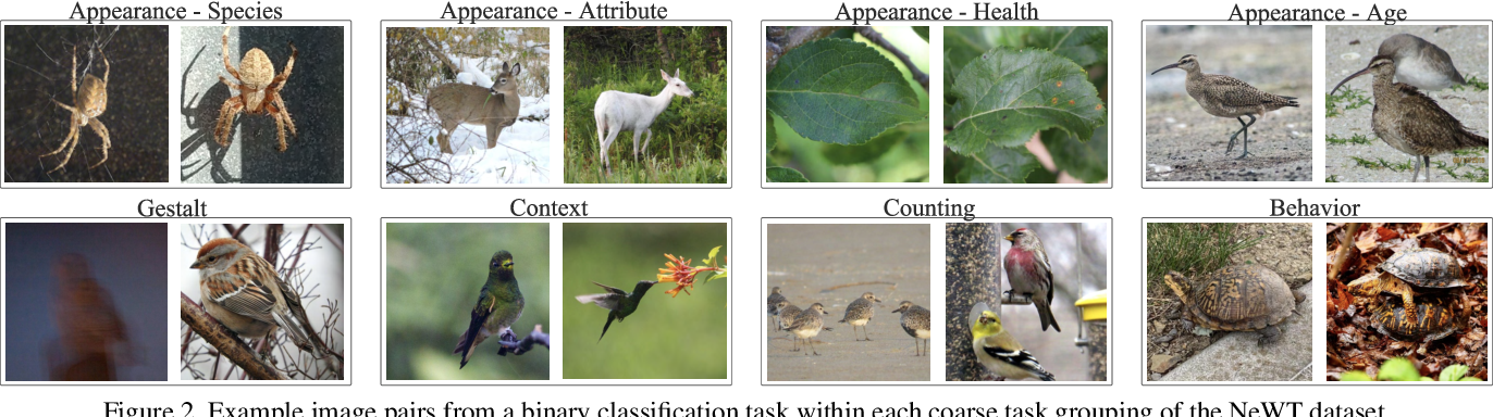 Figure 4 for Benchmarking Representation Learning for Natural World Image Collections