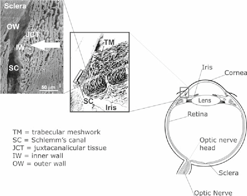 Fig. 1 Overview of ocular anatomy in aqueous humor drainage. Reproduced from Ethier et al. (2004) with permission of Elsevier. Middle panel modified from Hogan et al. (1971) with permission of Elsevier