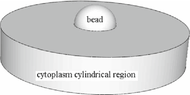 Fig. 6 Domain used in finite elementmodeling showing a bead embedded in a cylindrical region of cytoplasm with a radius of 10 µm. In this model shown, the half-immersion angle is 98◦